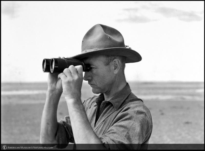 Roy Chapman Andrews (1884-1960), l'un des responsables du musée fut nommé chef de l'expédition. Cet homme avait pourtant commencé sa carrière au Muséum américain d'histoire naturelle comme...