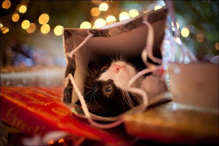 Quelle belle cachette ! Ce chat ronronne, bien à l'abri...