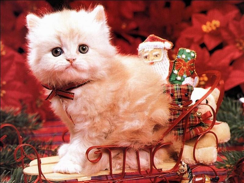 Est-ce le père Noël ? Non, c'est le chat Noël. Pourquoi ?