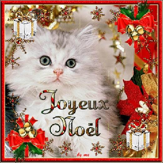 Quelle oreille de ce magnifique chaton est cachée par un cadeau ?