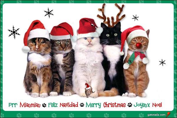 Combien d'animaux portent un bonnet de Noël ?