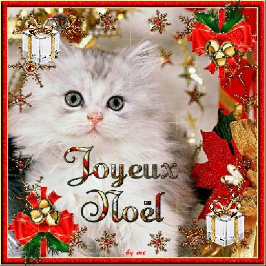 Noël avec nos amis les chats