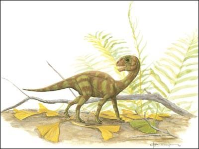 Mussaurus le dinosaure souris. Plusieurs squelettes complets de ce dinosaure furent découverts en 1979. Le plus grand squelette mesurait 20 cm, ce qui faisait du mussaurus la plus petite espèce de dinosaure découverte. Aujourd'hui, les paléontologues pensent qu'il s'agissait de bébés et qu'un mussaurus adulte mesurait...