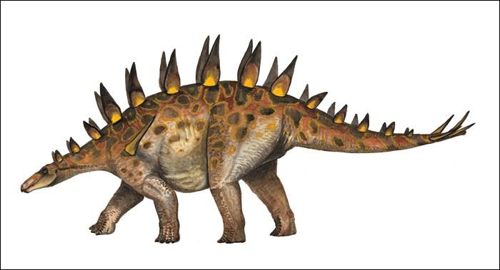 Le dravidosaure était autrefois considéré comme le dernier stégosauridés à avoir existé. Avec une longueur estimée de trois mètres, il aurait également été le plus petit membre du groupe. Cependant des études ultérieures ont prouvé que le dravidosaure était en réalité...