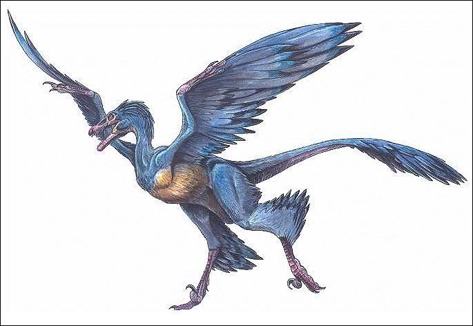 L'archaeoraptor est le nom donné à un fossile frauduleux. Le prétendu découvreur avait associé un fossile d'oiseau primitif avec celui d'un petit dinosaure arboricole nommé...
