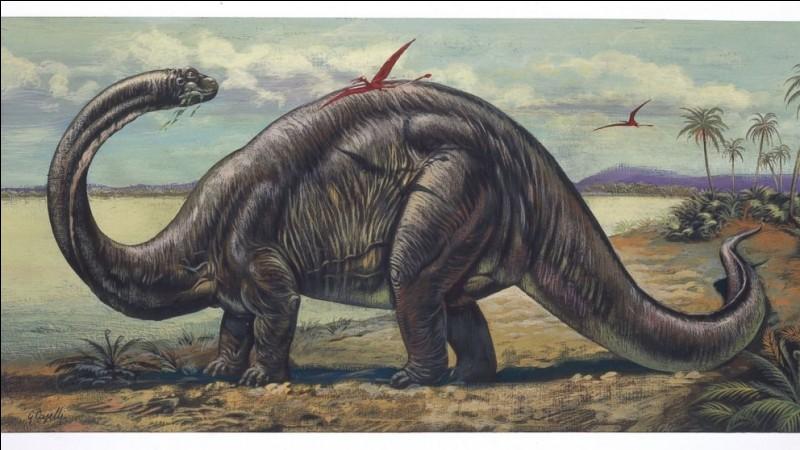 En 1879, le brontosaure fut décrit à partir des ossements de deux dinosaures, les restes d'un apatosaure mélangé avec la tête et les membres antérieurs d'un...
