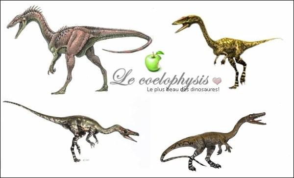 (Coelophysis willistonu ; Coelophysis longicollis). L'espèce type, Coelophysis bauri, a été décrite en 1889. Les autres espèces sont très probablement des spécimens...