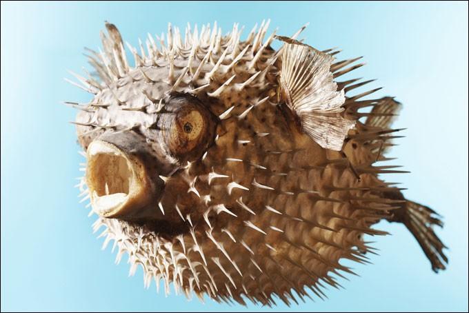 Quizz les plats les plus bizarres au monde quiz plats - Animal qui mange les fourmis ...