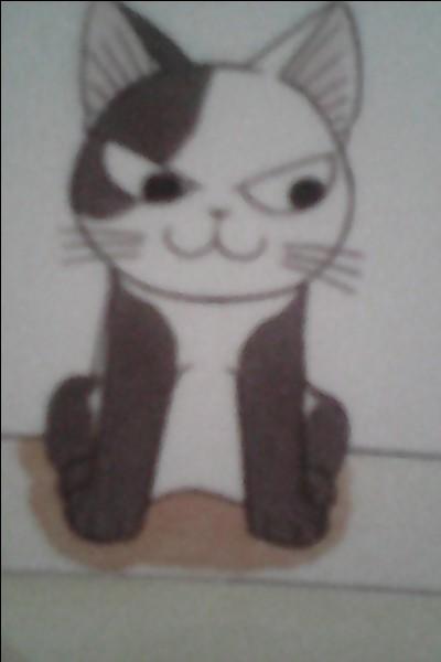Comment s'appelle le chat de la photo ?