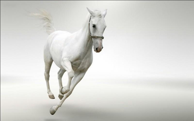 Quelle est la robe du cheval à droite ?