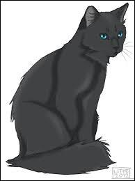 En quel chat Museau Cendré s'est-elle réincarnée ?