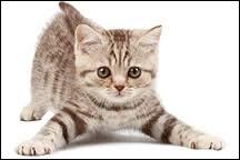 John Blacksad est un chat détective privé.