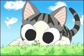 Chi est le nom d'un chat de fiction.