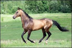À quelle allure est ce cheval ?