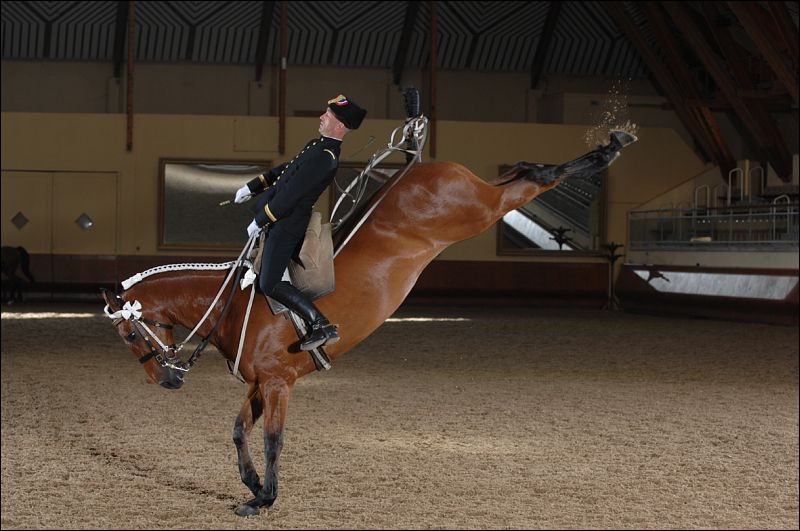 Quelle est la position de ce cheval ?