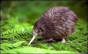 C'est un kiwi.
