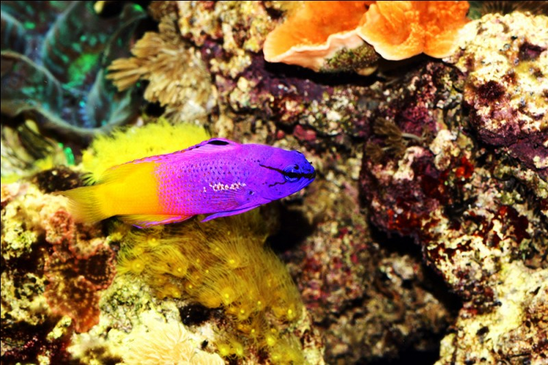 Quizz aquariophilie quiz aquariophilie for Grand bac a poisson