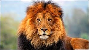 Quel est le nom scientifique du lion ?