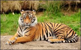 Quel est le nom scientifique du tigre ?