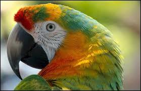 Quel est le nom scientifique du perroquet ?