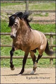 Sur la photo, le cheval a-t-il une liste ?