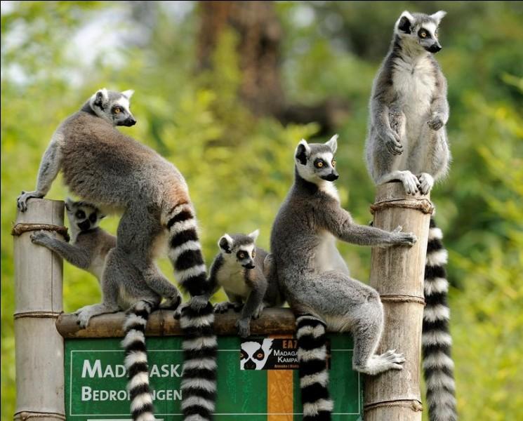 Dans quel pays peux-tu voir ces animaux ?