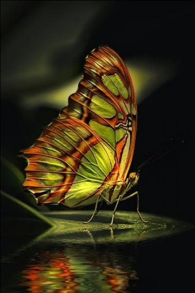 On peut voir des papillons dans des contrées très froides, en Alaska par exemple !