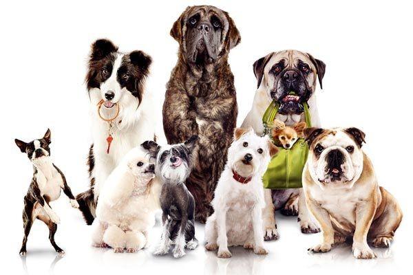 Quelle race de chiens es-tu ?