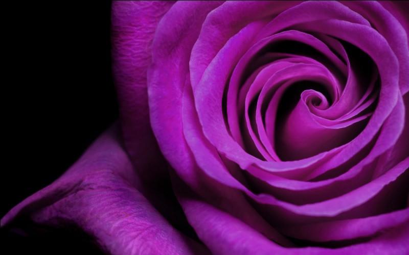 Quelles couleurs faut-il mélanger pour obtenir du violet ?