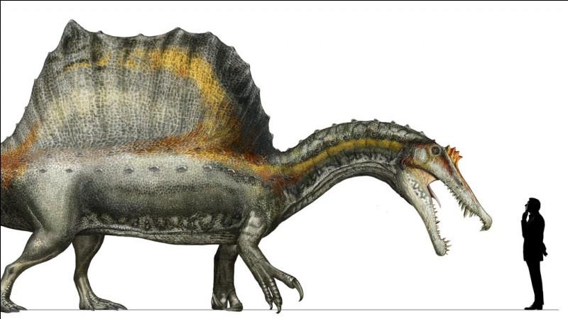 Titanoboa n'est pourtant pas le carnivore terrestre le plus long. Spinosaure, le plus grand des dinosaures carnivores, pouvait mesurer 14 mètres du museau au bout de la queue. Il a vécu...