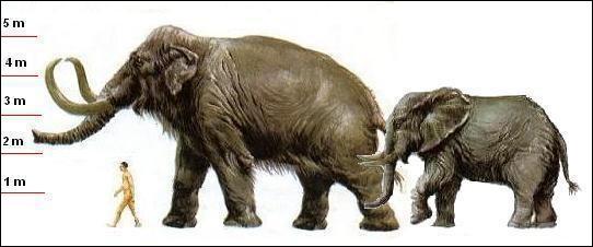 Mammuthus sungari (9,10m ; 17T) est le plus lourd des pachydermes. Il a vécu...