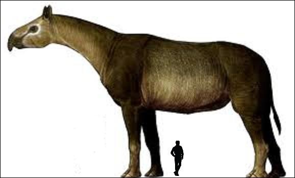 Mammuthus sungari n'est pourtant pas le plus lourd mammifère terrestre de que la Terre ait jamais porté. Le Paracerathérium (8m ; 20T) le dépasse en hauteur et en poids.Il a vécu...