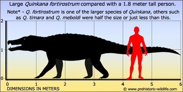 Quikana (taille 6m) est quant à lui, le plus grand crocodile terrestre de tous les temps. Il a vécu...