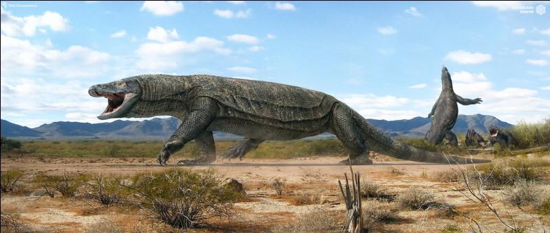 Mégalania (taille 6m) est le plus grand varan de tous les temps.Cet animal...