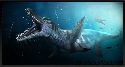 Le Mosasaurus maximus, n'était pourtant pas le reptile marin à la plus grande et plus puissante mâchoire. Le Liopleurodon (taille 13 mètres) avait une tête plus grande et une morsure plus puissante. Il a vécu...