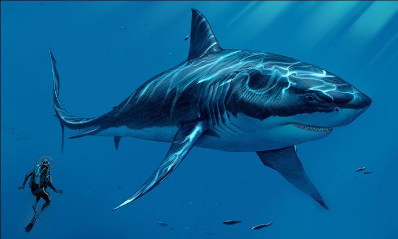 Cependant, le Leedsichthys ne se nourrissait probablement que de très petits animaux comme le plancton. Ce qui n'est pas le cas du Mégalodon (taille 16 mètres) le plus grand requin de tous les temps.Ce requin a vécu...