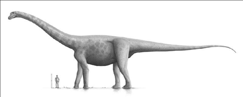 Cependant, les animaux les plus longs à avoir existé, restent sans aucun doute les dinosaures. Le Bruhathkayosaure, mesurait 40 mètres de long et pesait 70 tonnes. Il a vécu...