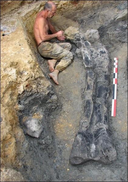 Pour terminer, savez-vous qu'en France aussi on a découvert l'os d'un dinosaure gigantesque ? Il s'agit d'un fémur long de 2,20 m, trouvé en 2010 dans...