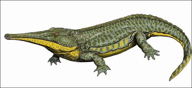 Prionosuchus (taille 9m) le plus grand amphibien de tous les temps, est beaucoup plus imposant que Beelzebufo.Il a vécu...