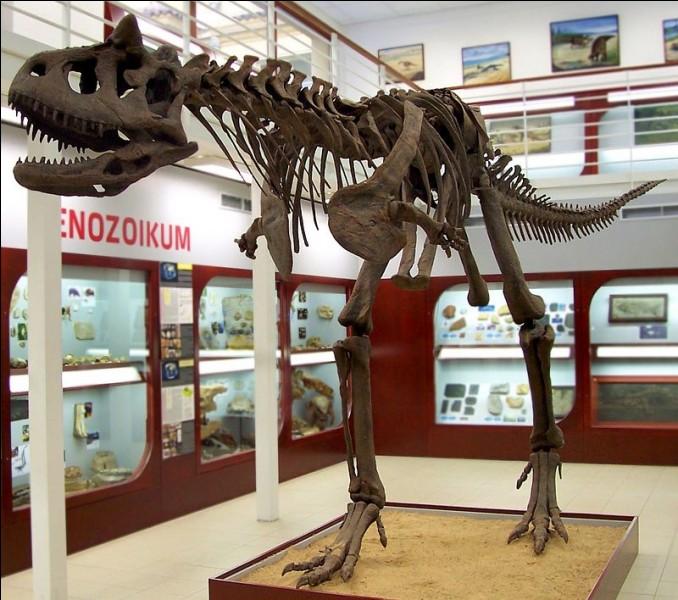 Ce squelette vient de quel dinosaure ?