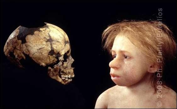 Combien de cm3 le cerveau de l'homo sapiens a-t-il atteint ?
