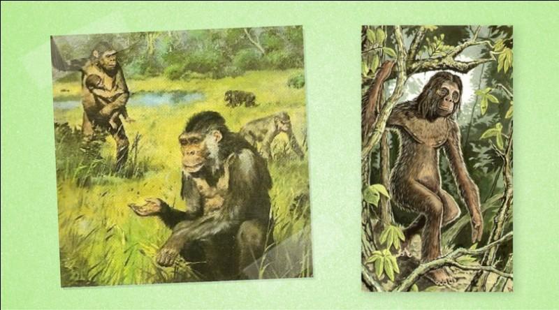 Ensuite, quelle espèce a succédé il y a 15 millions d'années ?