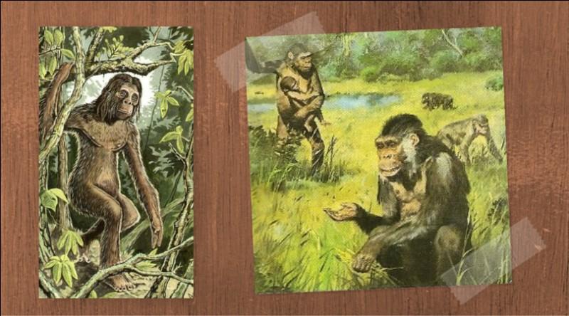 Quelle était la particularité des individus de cette espèce ? (ceux de la question 3)