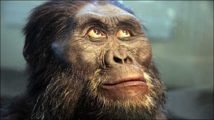 Il y a 3 millions d'années, qui est petit, voûté et chasse ?