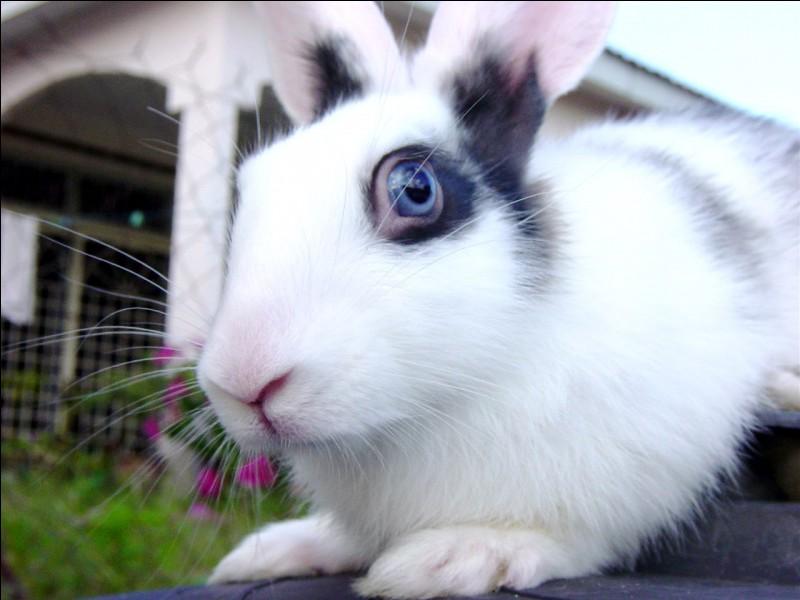 Comment peut-on changer la texture d'un lapin ?