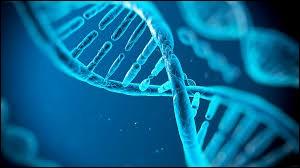 Comment appelle-t-on une cellule à 2n chromosomes ?