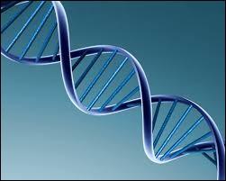 Qu'en est-il d'une cellule à n chromosomes ?