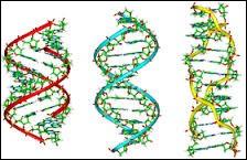 Combien de divisions composent la méiose ?