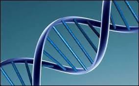 De quelle cellule la division réductionnelle divise-t-elle la ploïdie ?