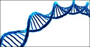 Combien de cellules a-t-on après la première division de la méiose ?